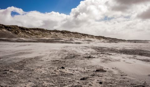 Mud and plants on new pacific island confuse scientist